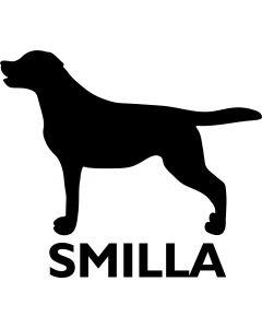 Labrador m. navn
