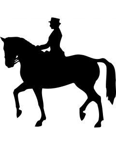 Dressur hest med rytter