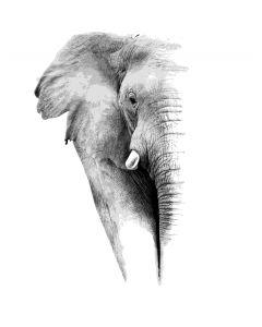 Elefant Wall Stickers 3852