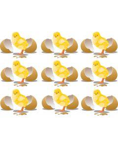 A4-ark med kylling ved æggeskal1 2601