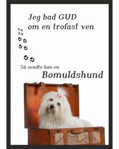 Bomuldshund - Coton de Tulear