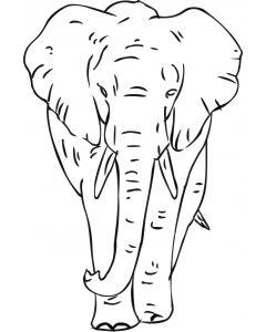 Elefant 3, vr nr 3811 fra
